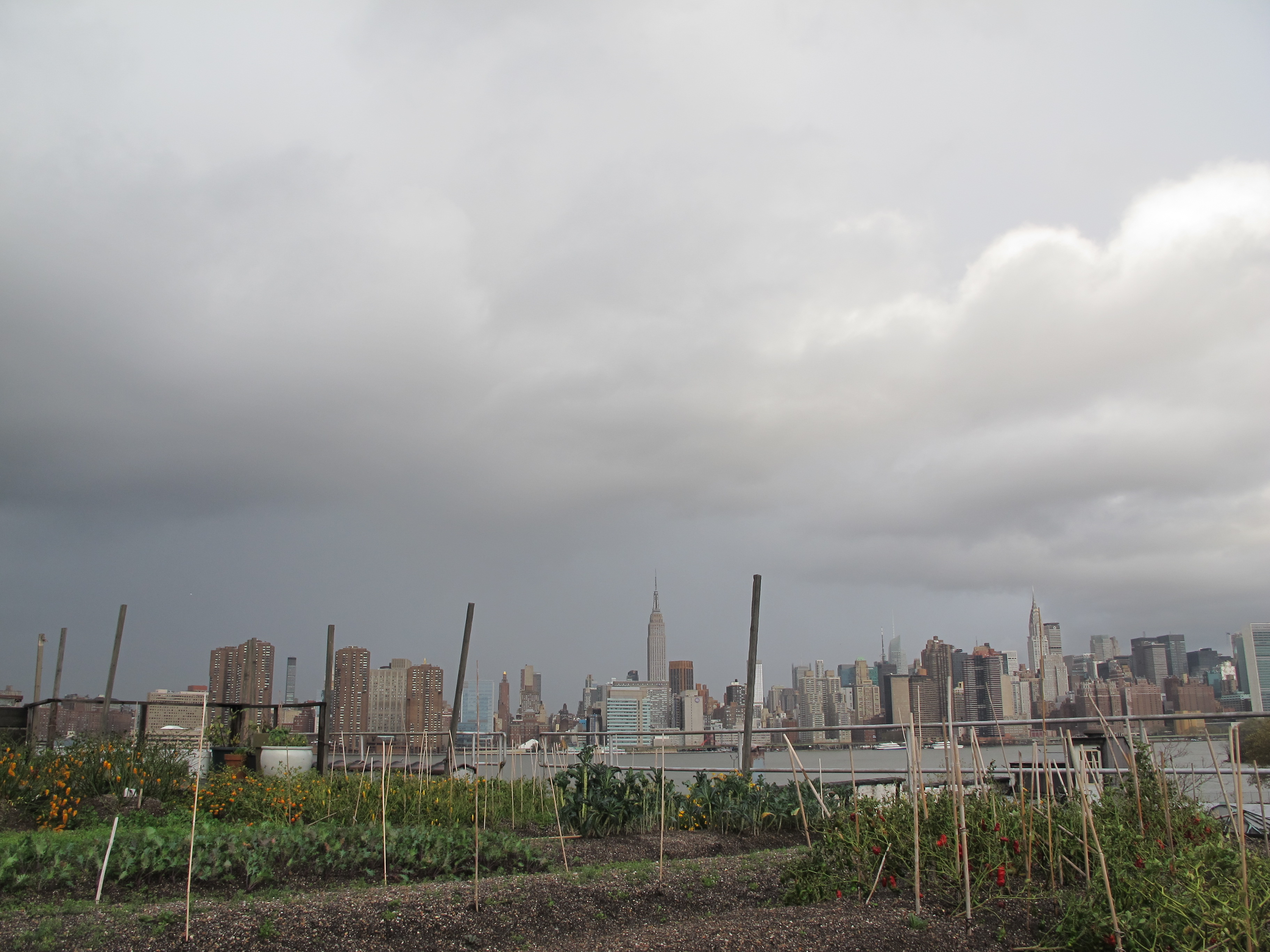 Hurricane Sandy at Rooftop Farm